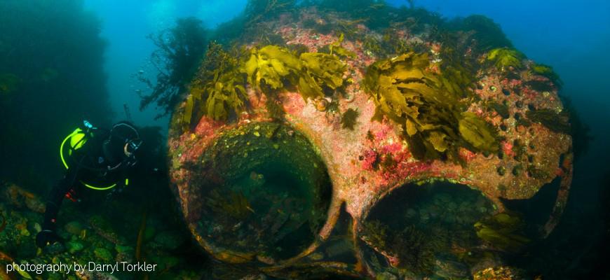 scuba tank air compressor wellington island bay divers